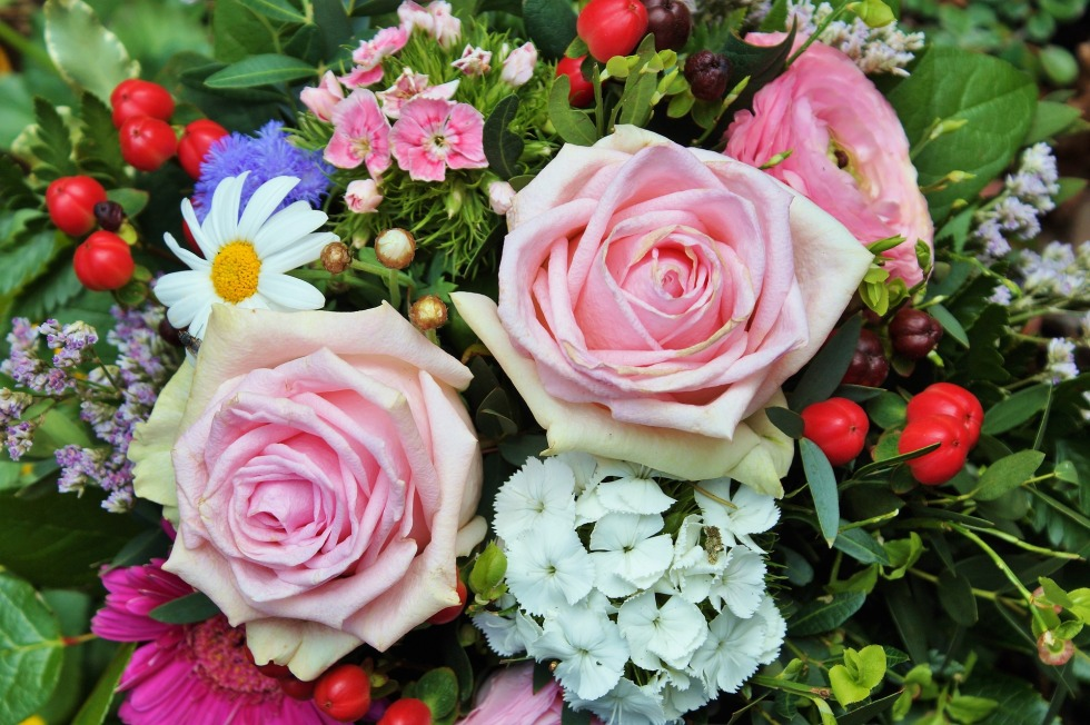 roses-2214007_1920